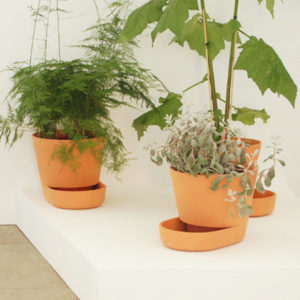 plant-pots_uli-budde3.jpg