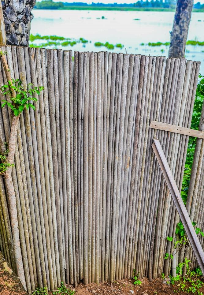 A fence at the Academy made using bamboo sticks.
